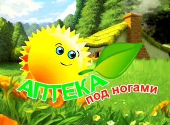 Аптека-под-ногами-Донник-желтый