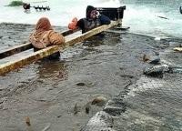 программа Охота: Азбука поплавочной ловли с Александром Дунаевым 1 серия