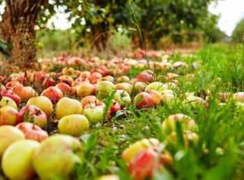 программа Загородная жизнь: Битва за урожай Сбор урожая