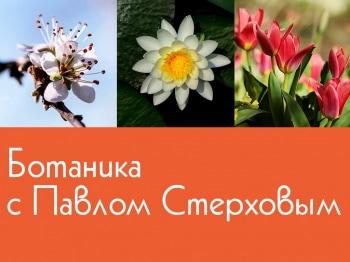 Ботаника с Павлом Стерховым в 14:25 на канале