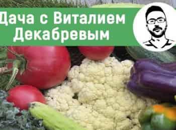 программа Загородный: Дача с Виталием Декабревым Хлопотный сентябрь