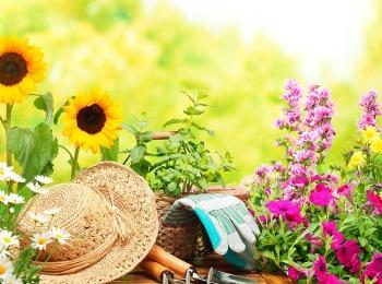 программа Загородная жизнь: Дачная академия Разбиваем цветники