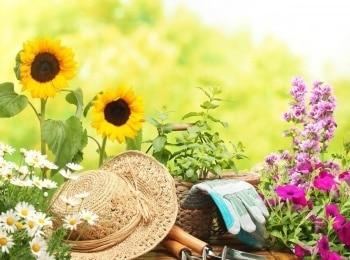 программа Загородная жизнь: Дачная экспертиза Эпизод 13 й