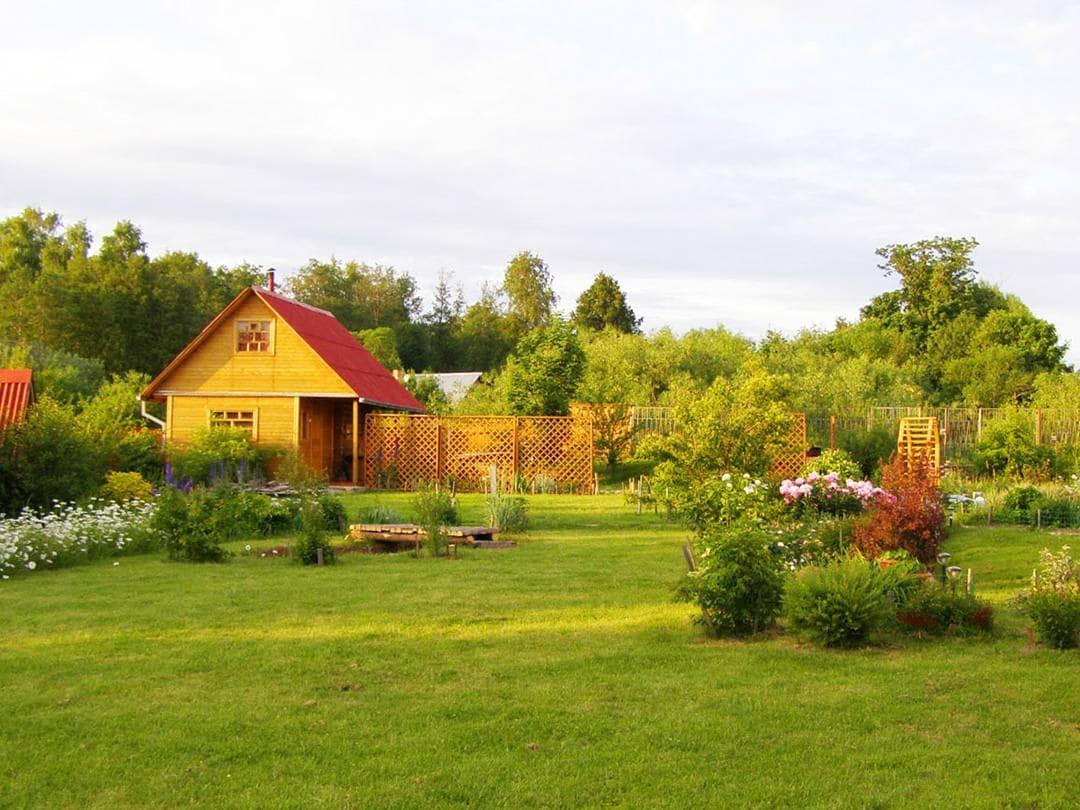 программа НТВ: Дачный ответ Южное солнце и светящиеся растения