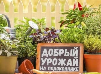 программа Загородная жизнь: Добрый урожай на подоконнике Горох на вашем окне