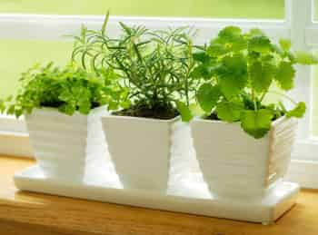 программа Загородная жизнь: Добрый урожай на подоконнике Предпосевная подготовка