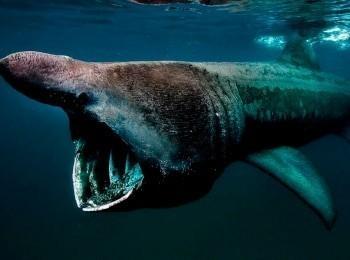 программа Русский Экстрим: Галапагос Царство гигантских акул