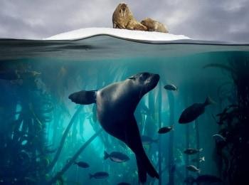 программа Пятница: Голубая планета 2 Зелёные моря