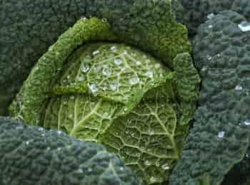 программа Загородная жизнь: Королева капусты Сирень