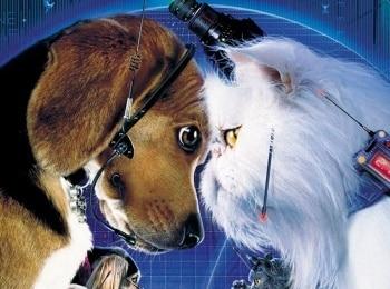 Кошки против собак кадры