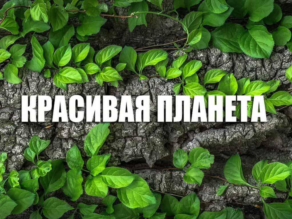 программа Россия Культура: Красивая планета Франция Страсбург Гранд Иль