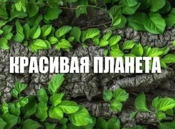программа Россия Культура: Красивая планета Иордания Крепость Кусейр Амра