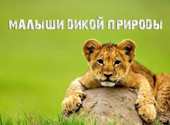 программа Телеканал О!: Малыши дикой природы