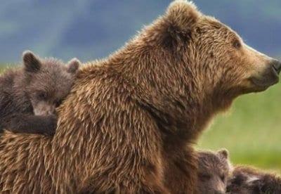 кадр из фильма Медведи