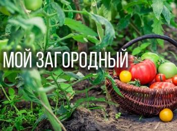 программа Загородный: Мой Загородный Украшаем участок к Новому году