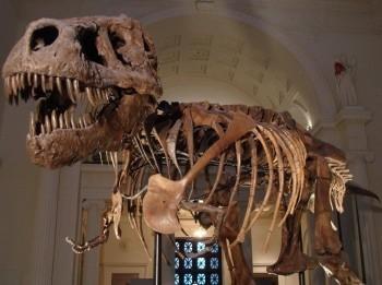 программа Travel Channel: Музейные тайны Медведь Смоки и многое другое
