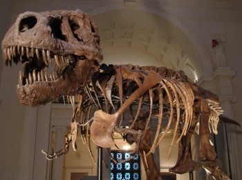 программа Travel Channel: Музейные тайны Радарный пес