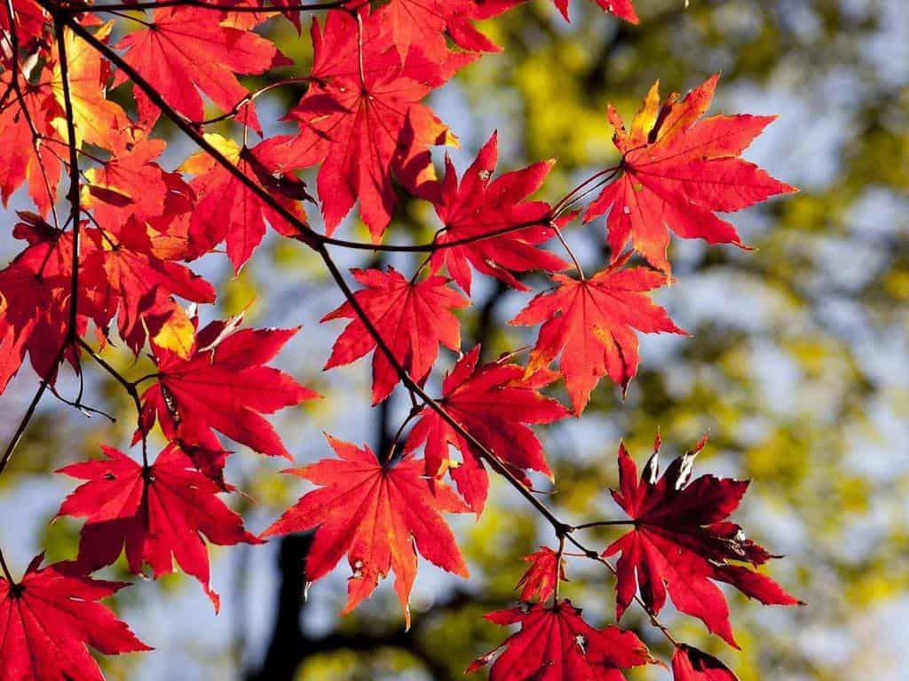 программа Россия Культура: Осень мир, полный красок