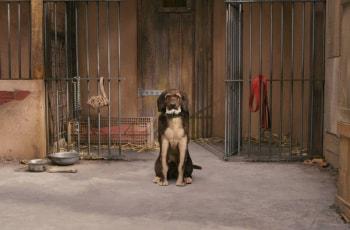 программа СТС: Остров собак