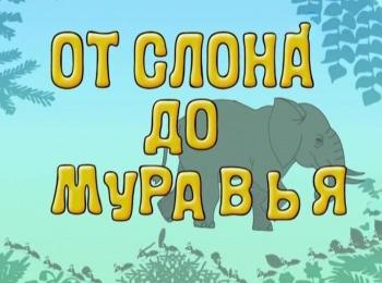 программа В гостях у сказки: От слона до муравья Страус
