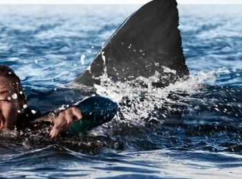 программа Киноужас: Открытое море: Новые жертвы