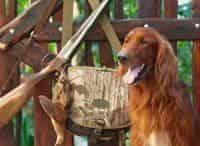 Охотничьи собаки 13 серия в 13:25 на канале