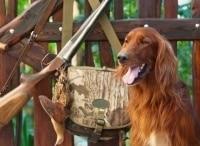 Охотничьи собаки 3 серия в 11:00 на канале