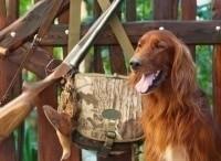 программа Охота: Охотничьи собаки 4 серия