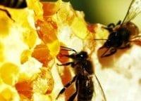 Пчеловодство в Башкирии