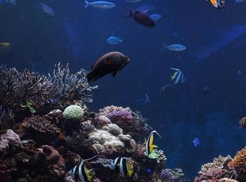 Подводный мир 1 серия в 15:00 на канале
