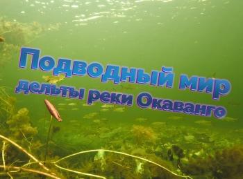 программа Продвижение: Подводный мир Окованго