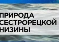 Природа Cестрорецкой низины в 14:00 на канале