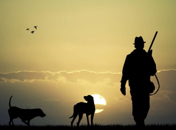 Прогулки с собаками в 15:00 на канале