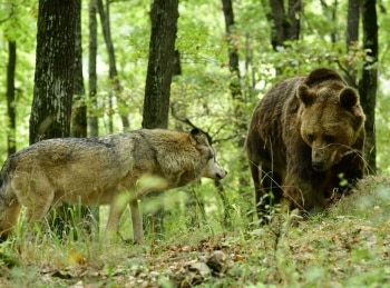 Путешествие волка в 01:25 на канале Культура