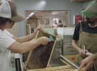 Рабочий класс Спасенные пчелиной королевой