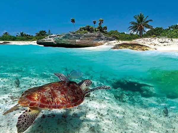 программа Россия Культура: Ритмы жизни Карибских островов Кораллы и квезали