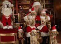 Рождественская пятерка в 14:00 на канале