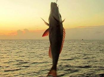 программа Охотник и рыболов