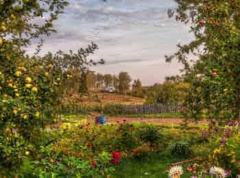 программа Загородная жизнь: Сад и огород Готовим теплицу к зиме