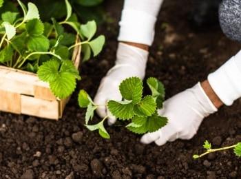 программа Продвижение: Садовые секреты от Гийома