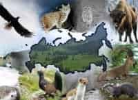 Сделано в России в 11:00 на канале