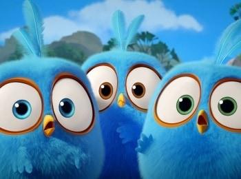 программа Карусель: Сердитые птички Пушистики Липкие перья