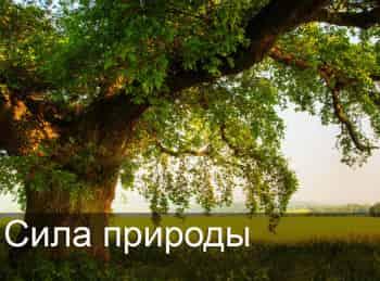 программа Загородный: Сила природы Сухие духи