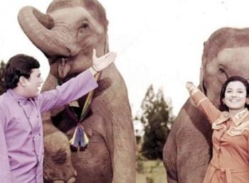 программа Домашний: Слоны мои друзья