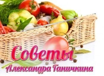 программа Загородный: Советы Александра Ганичкина Уход за томатами