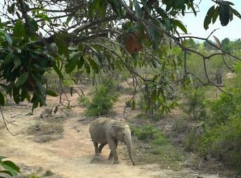 программа Продвижение: Спасение животных Тайланда
