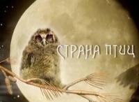 программа Россия Культура: Страна птиц Тетеревиный театр