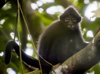 Тайны сингапурских лесов с Дэвидом Аттенборо в 12:10 на Россия Культура