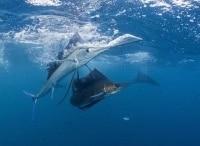 программа Охота: В Индийском океане 4 серия