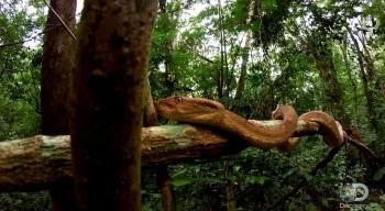программа Travel Channel: В поисках сокровищ: Змеиный остров Добро пожаловать в кошмар